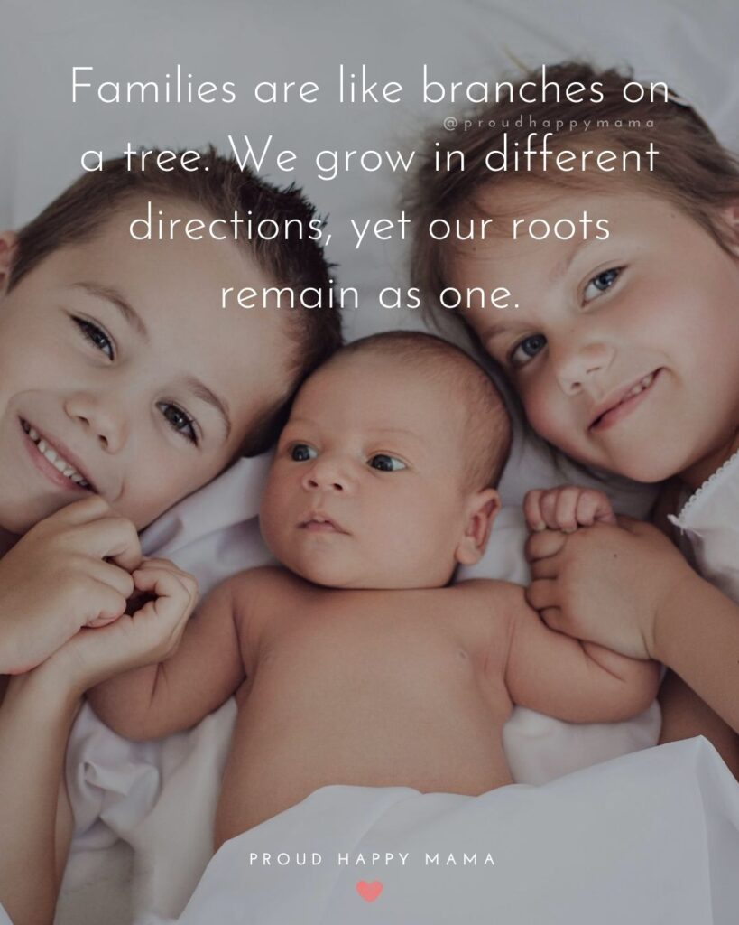 Quotes About Family | Families are like branches on a tree. We grow in different directions, yet our roots remain as one.