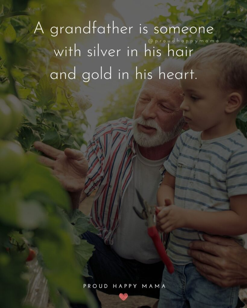 Quotes About Grandpas | A grandfather is someone with silver in his hair and gold in his heart.
